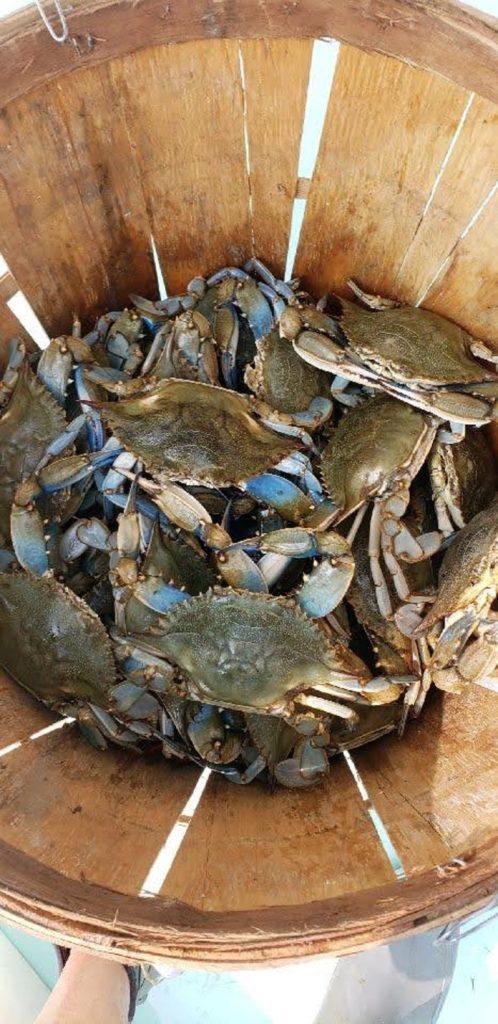 chesapeake-bay-charter-fishing-20-025
